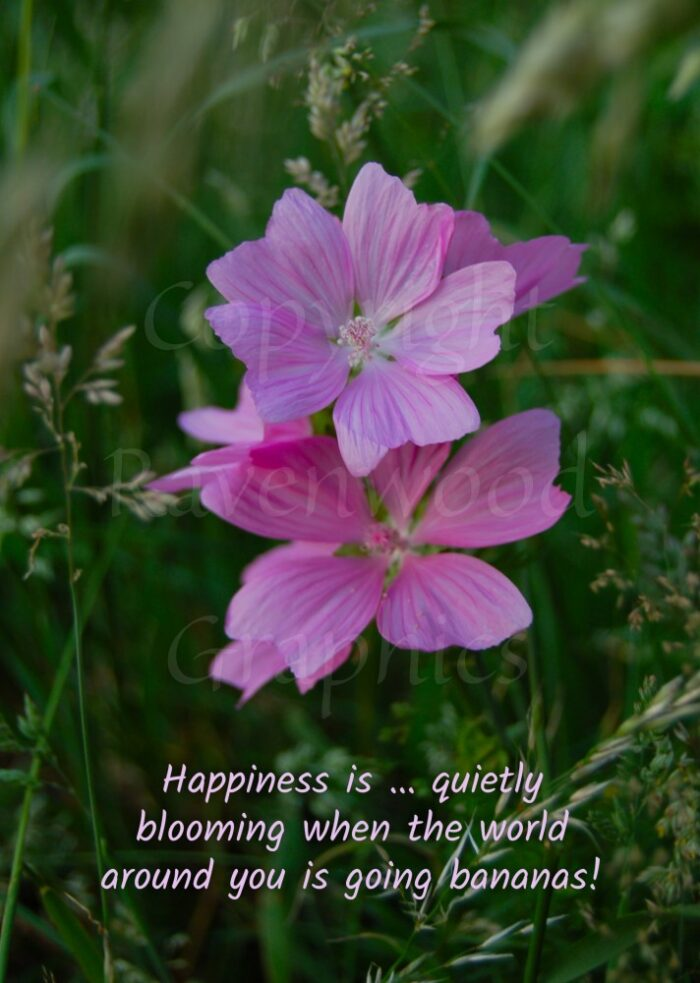 Quietly Blooming